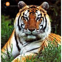 《布尔迷你拼图认知系列・动物篇》-老虎?狮子?豹
